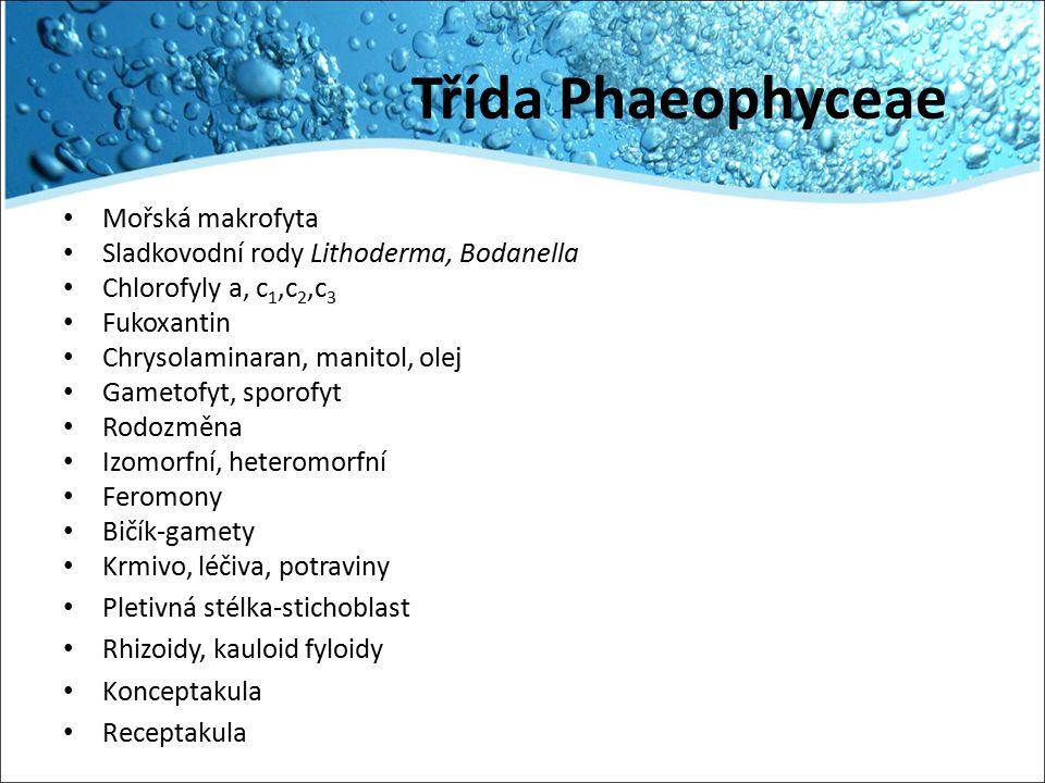 Třída Phaeophyceae Mořská makrofyta