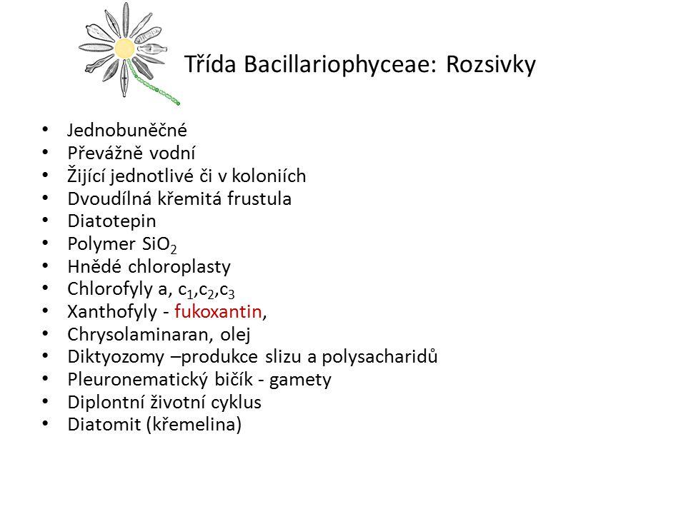 Třída Bacillariophyceae: Rozsivky