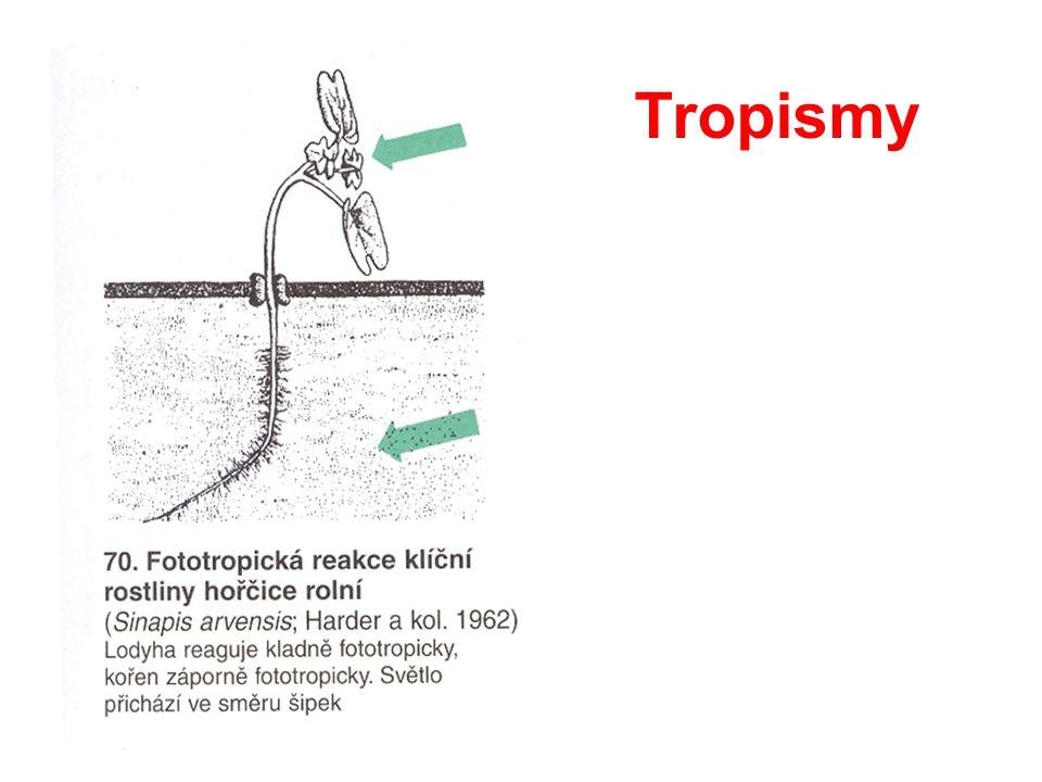 Tropismy