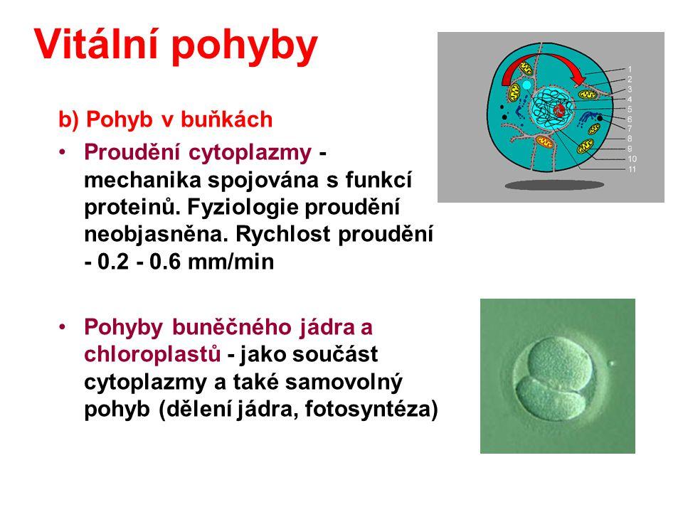 Vitální pohyby b) Pohyb v buňkách