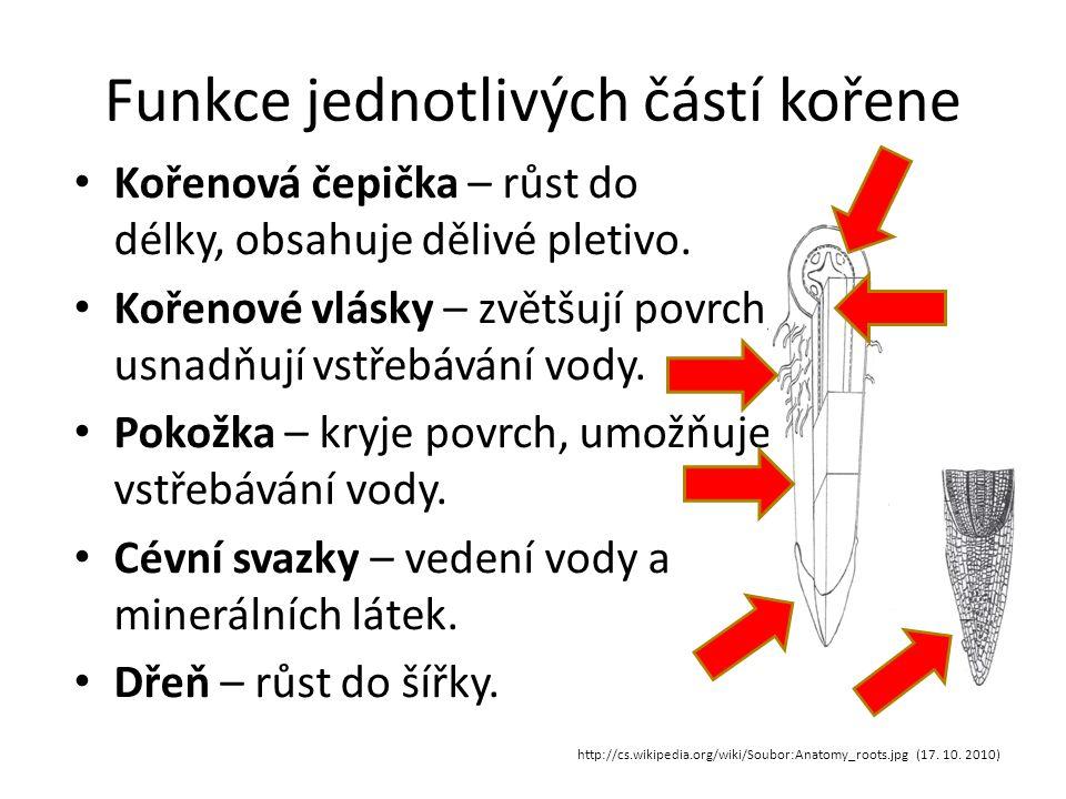 Funkce jednotlivých částí kořene