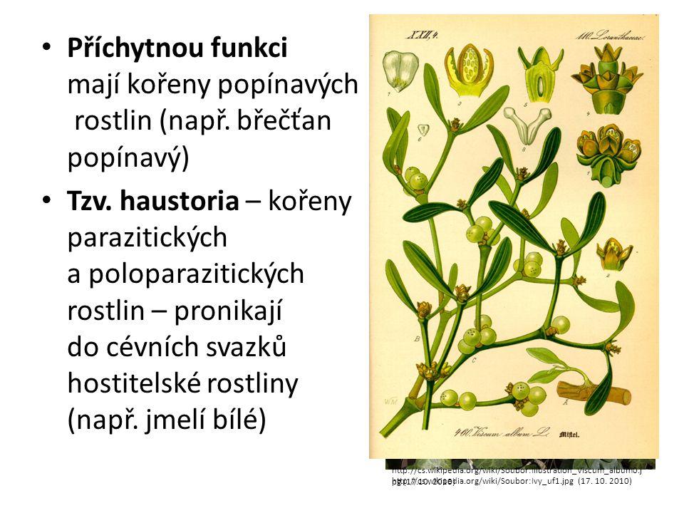 Příchytnou funkci mají kořeny popínavých rostlin (např
