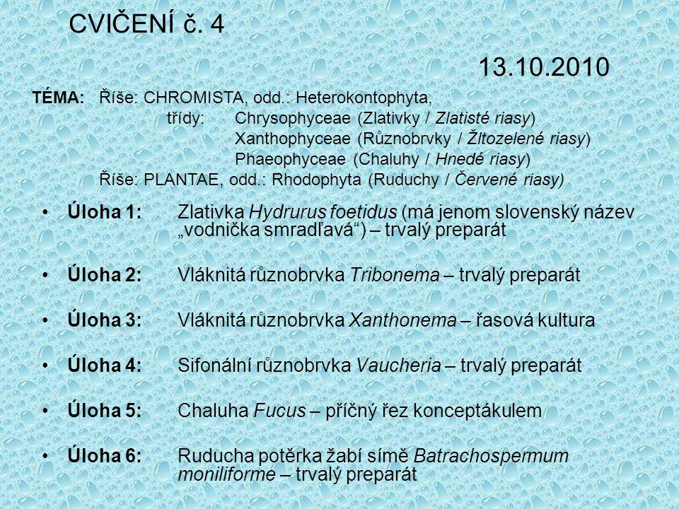 CVIČENÍ č. 4 13.10.2010 TÉMA: Říše: CHROMISTA, odd.: Heterokontophyta, třídy: Chrysophyceae (Zlativky / Zlatisté riasy)