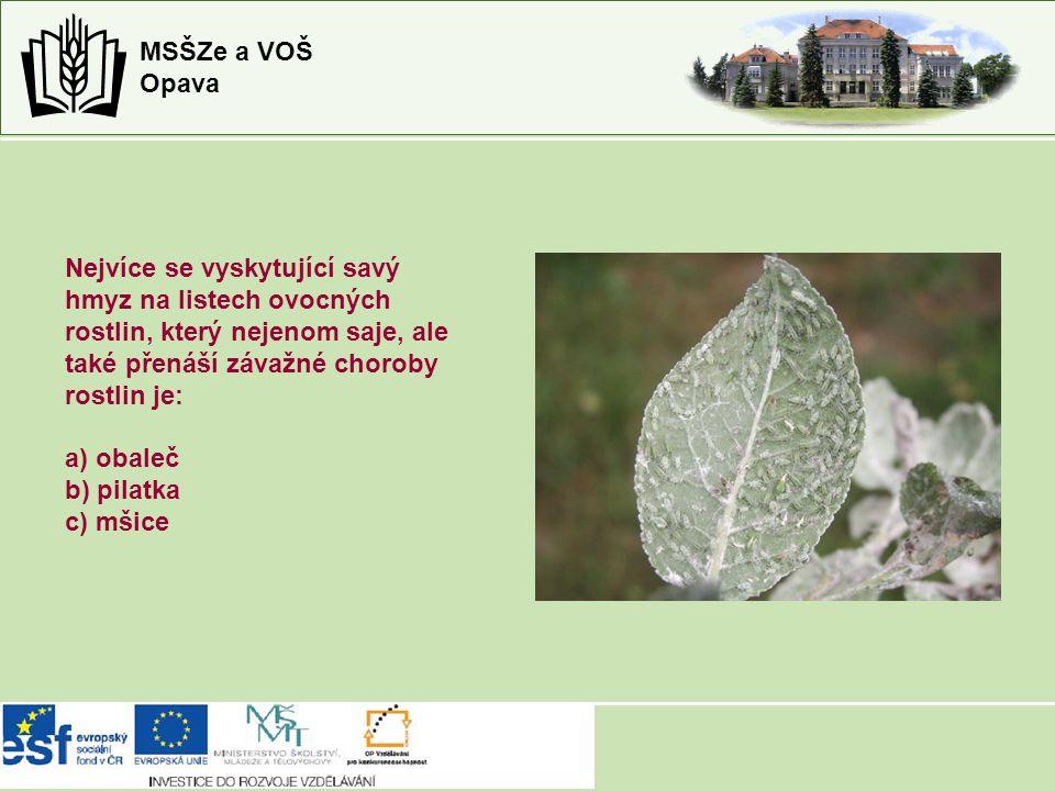 Nejvíce se vyskytující savý hmyz na listech ovocných rostlin, který nejenom saje, ale také přenáší závažné choroby rostlin je: a) obaleč b) pilatka c) mšice