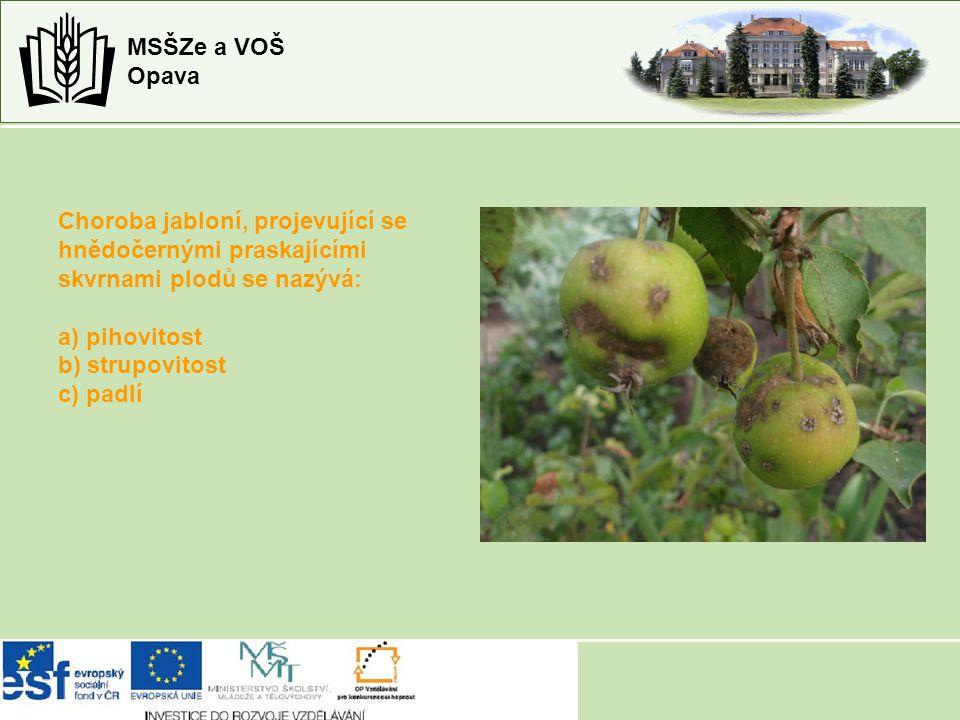 Choroba jabloní, projevující se hnědočernými praskajícími skvrnami plodů se nazývá: a) pihovitost b) strupovitost c) padlí