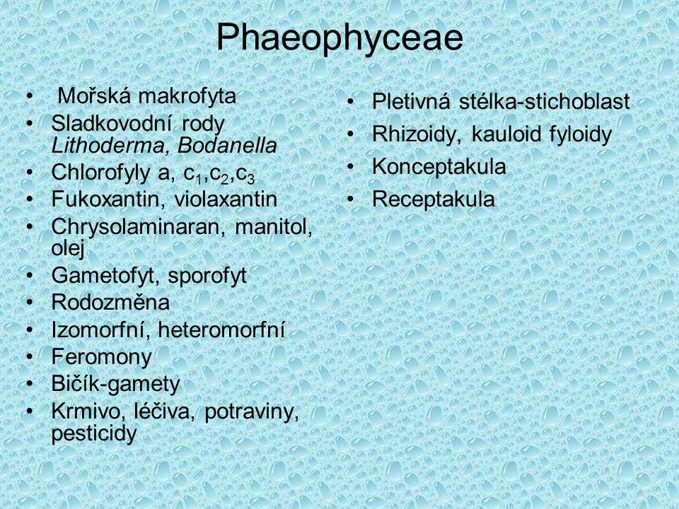 Phaeophyceae Mořská makrofyta Sladkovodní rody Lithoderma, Bodanella