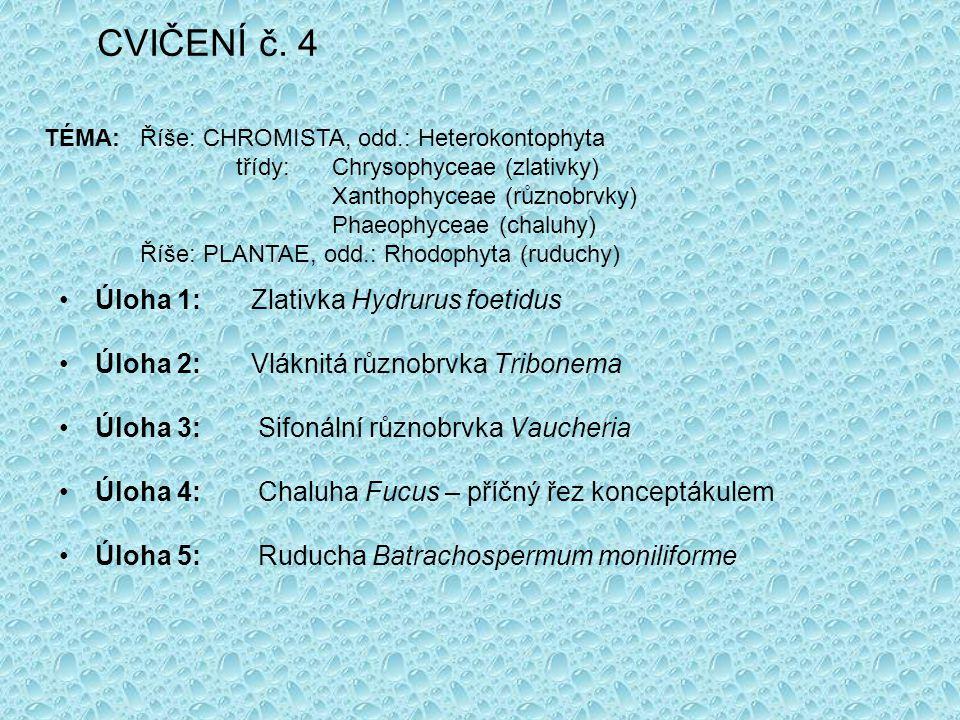 CVIČENÍ č. 4 Úloha 1: Zlativka Hydrurus foetidus