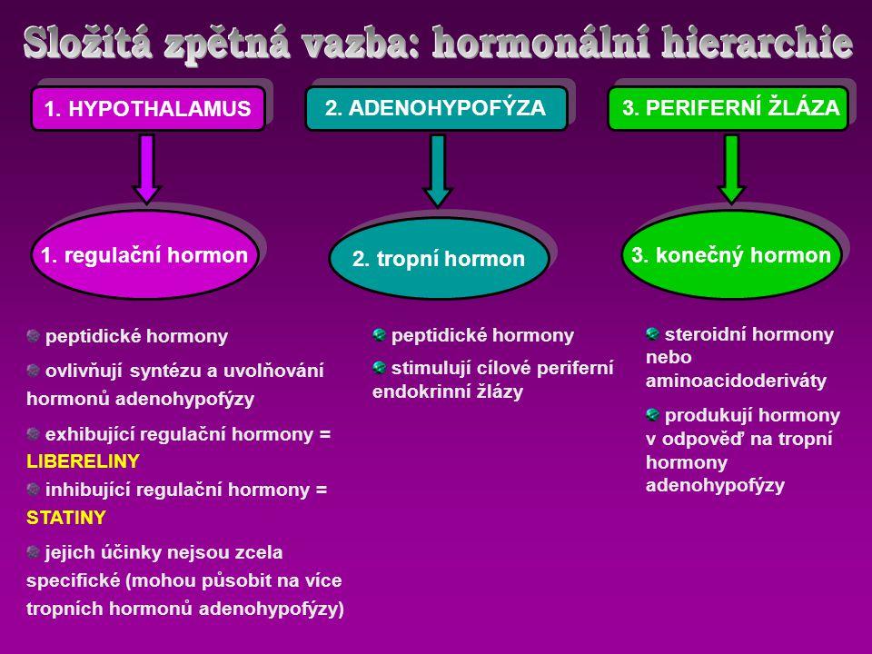 Složitá zpětná vazba: hormonální hierarchie