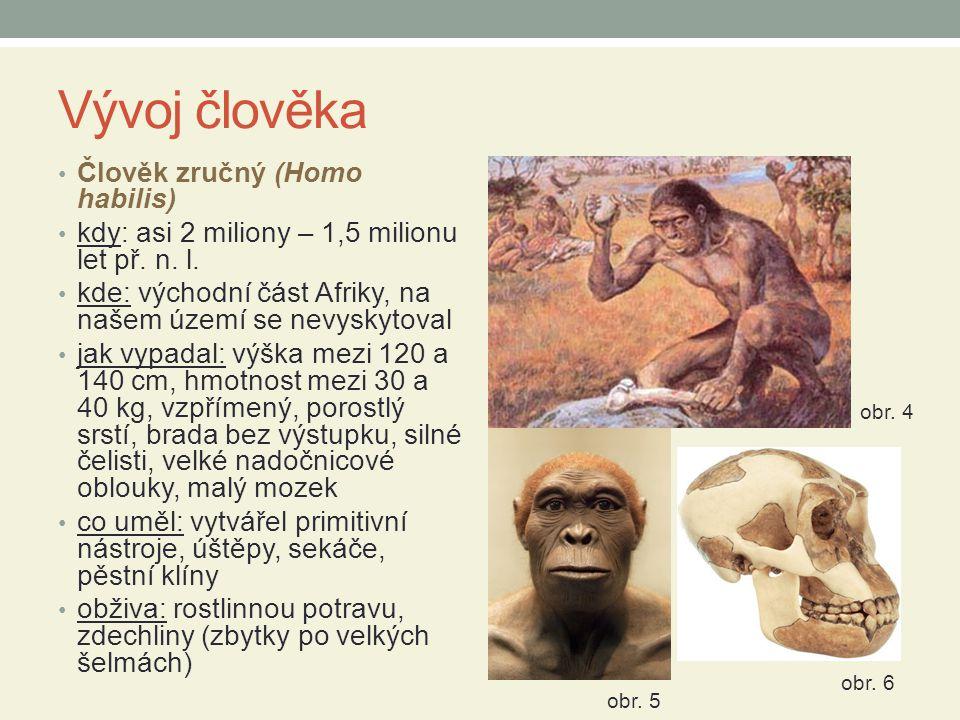 Vývoj člověka Člověk zručný (Homo habilis)