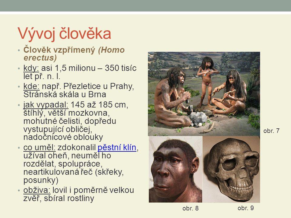 Vývoj člověka Člověk vzpřímený (Homo erectus)