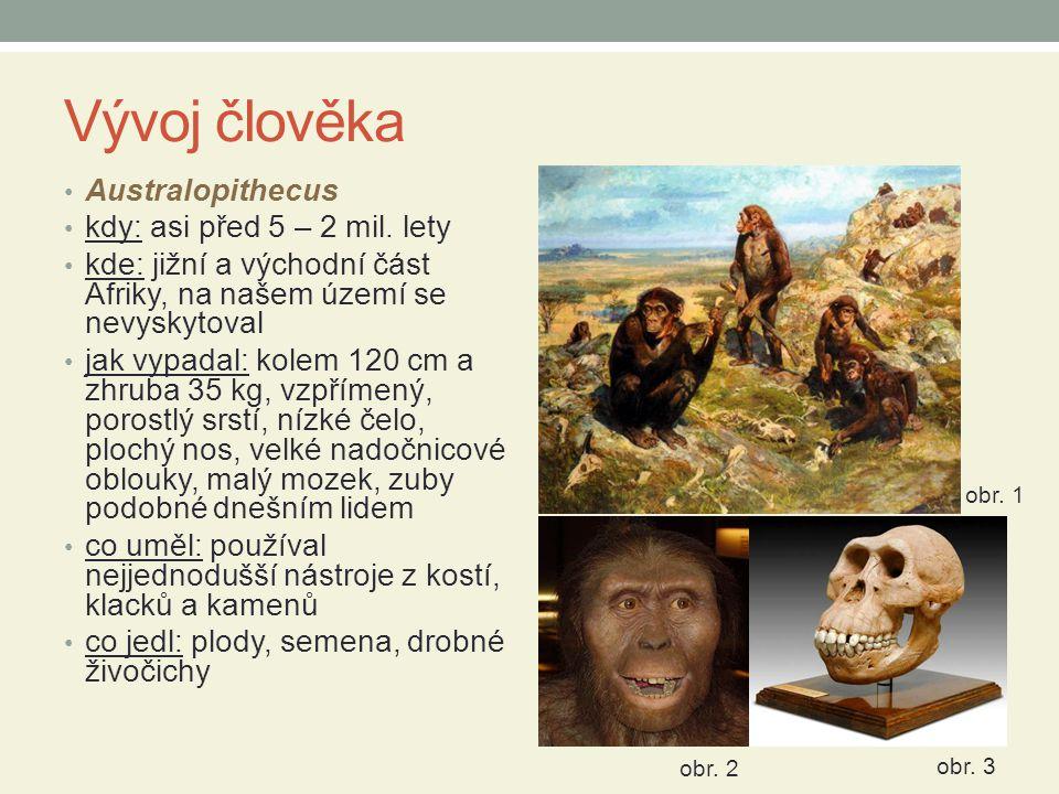 Vývoj člověka Australopithecus kdy: asi před 5 – 2 mil. lety
