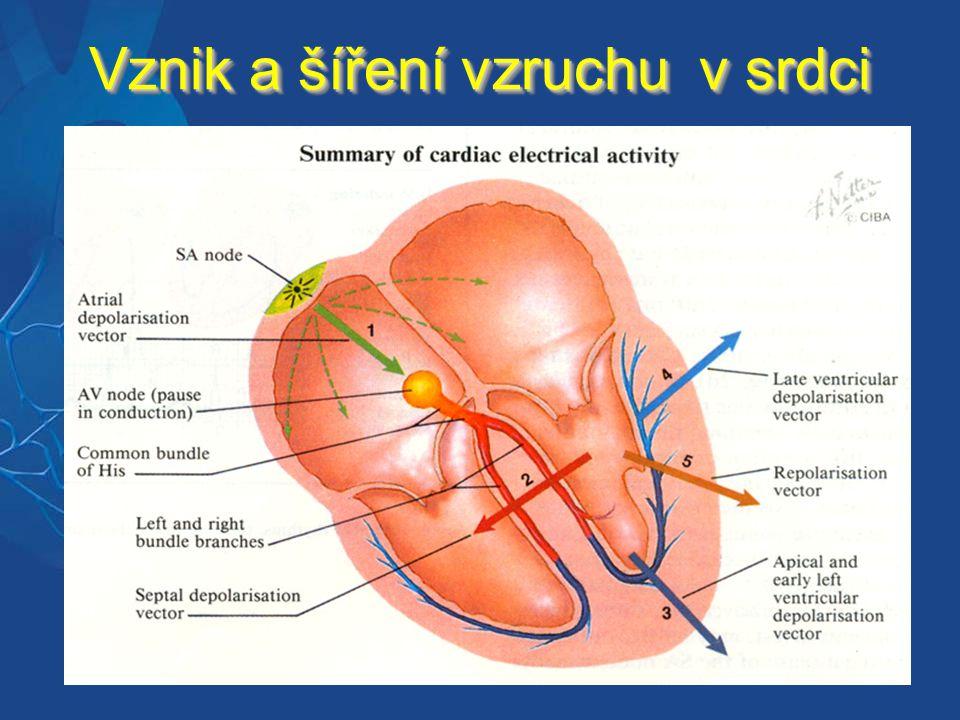 Vznik a šíření vzruchu v srdci