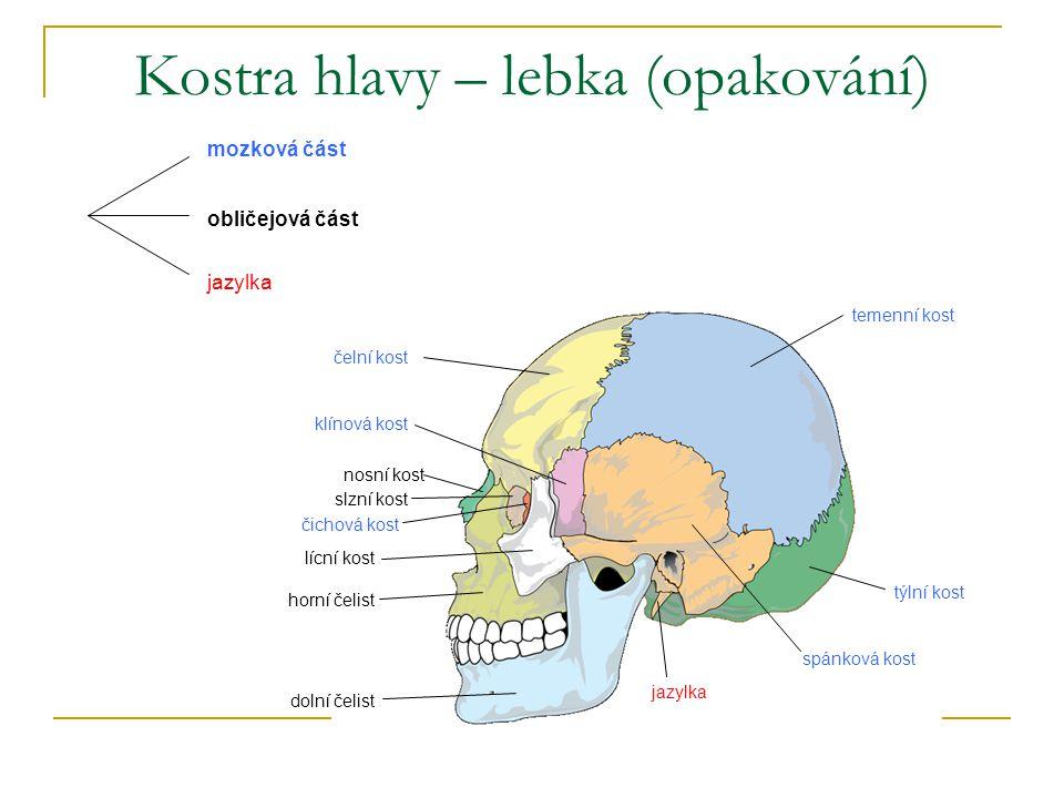 Kostra hlavy – lebka (opakování)