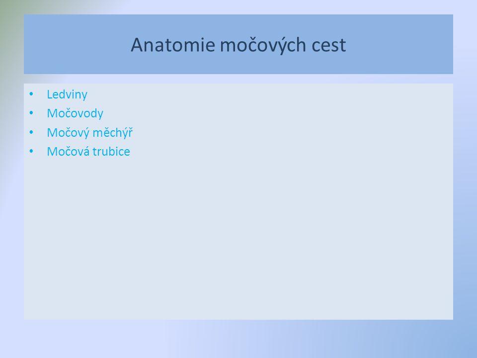 Anatomie močových cest