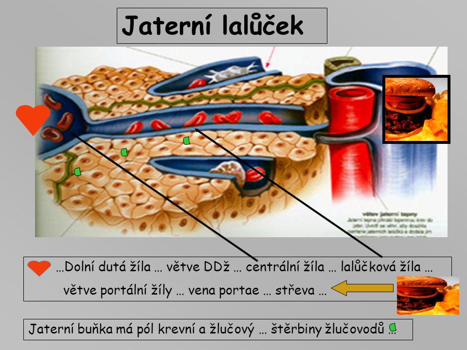Jaterní lalůček …Dolní dutá žíla … větve DDž … centrální žíla … lalůčková žíla … větve portální žíly … vena portae … střeva …