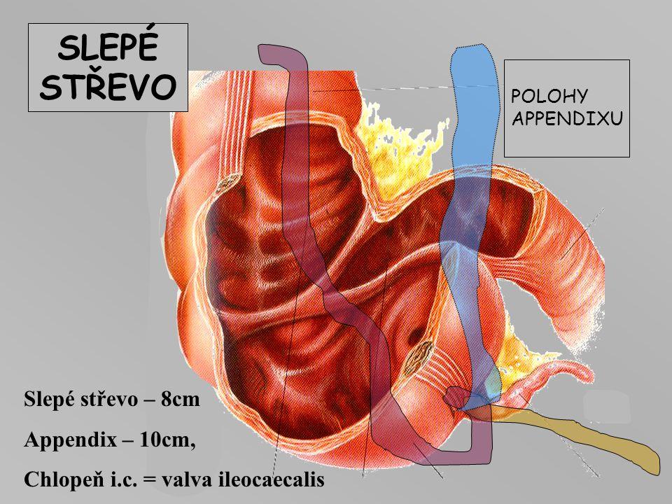 SLEPÉ STŘEVO Slepé střevo – 8cm Appendix – 10cm,