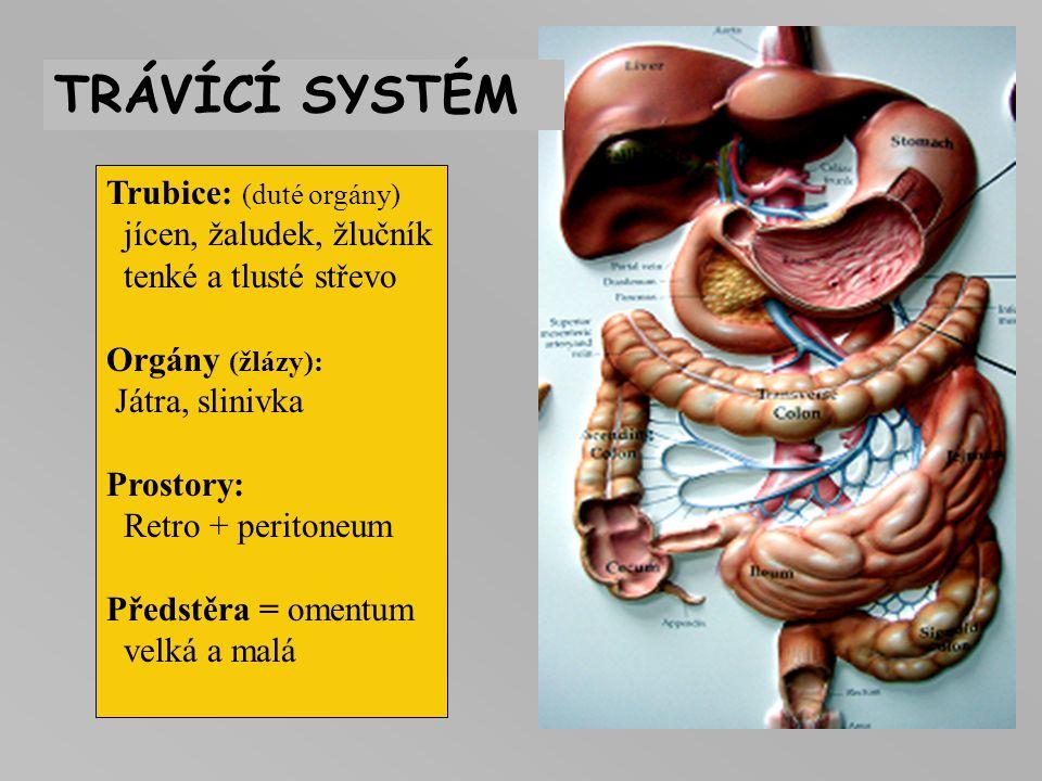 TRÁVÍCÍ SYSTÉM Trubice: (duté orgány) jícen, žaludek, žlučník