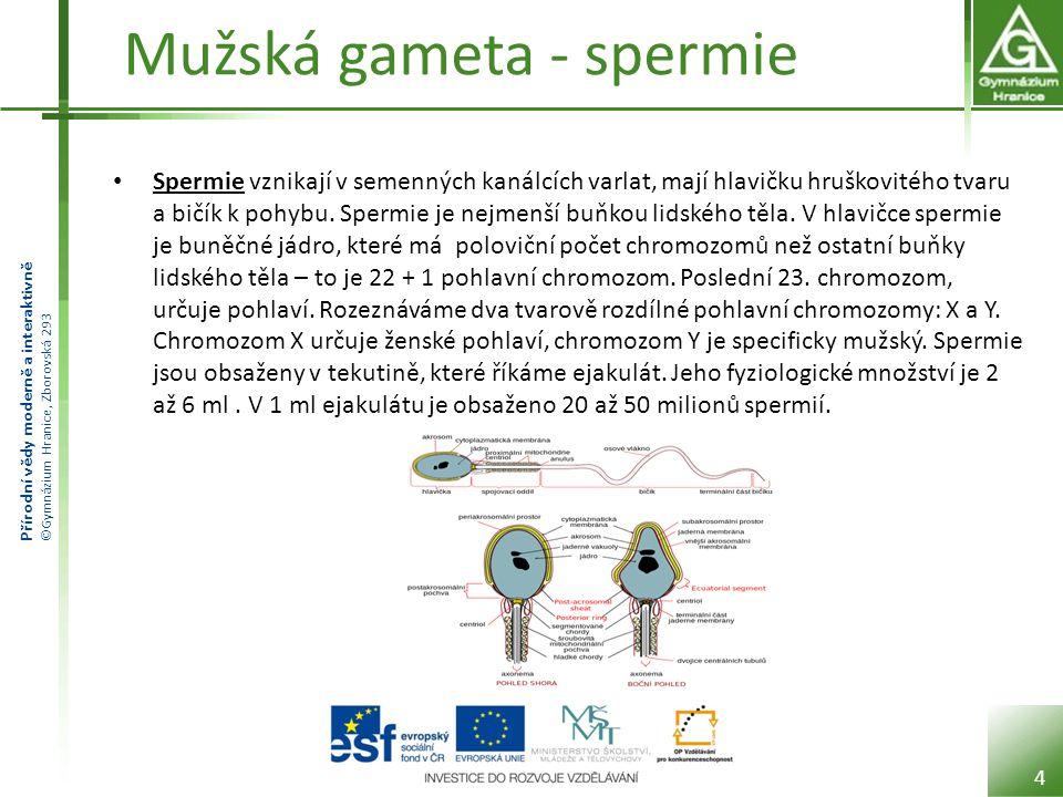 Mužská gameta - spermie