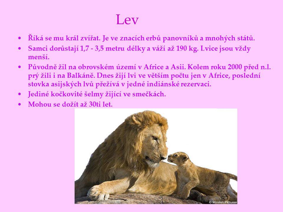 Lev Říká se mu král zvířat. Je ve znacích erbů panovníků a mnohých států.