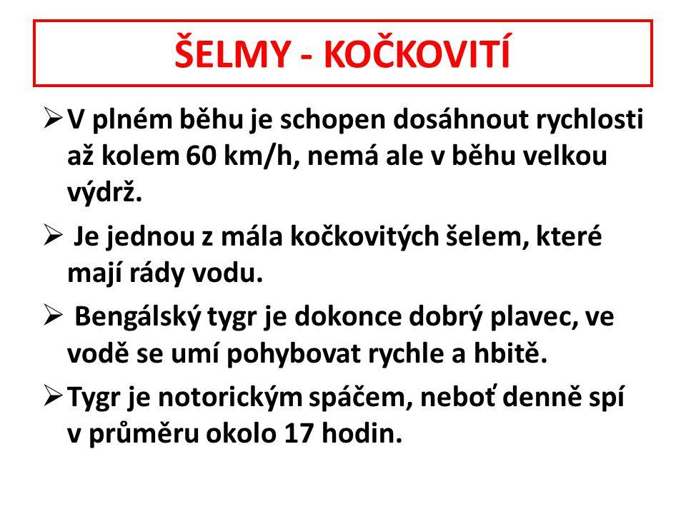 ŠELMY - KOČKOVITÍ V plném běhu je schopen dosáhnout rychlosti až kolem 60 km/h, nemá ale v běhu velkou výdrž.