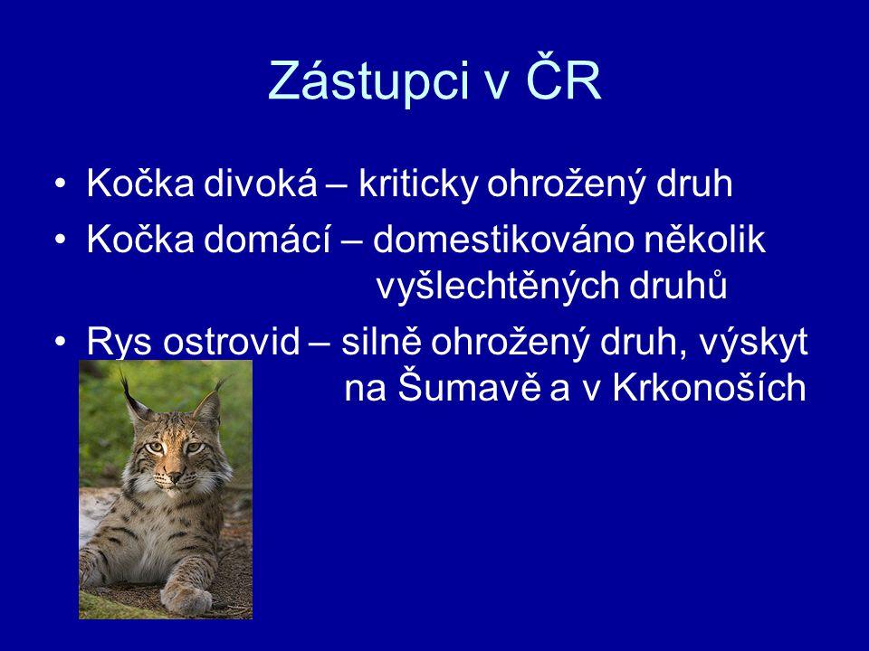 Zástupci v ČR Kočka divoká – kriticky ohrožený druh