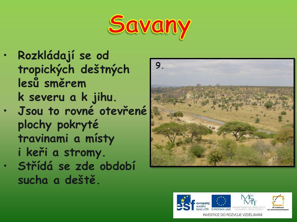 Savany Rozkládají se od tropických deštných lesů směrem k severu a k jihu.