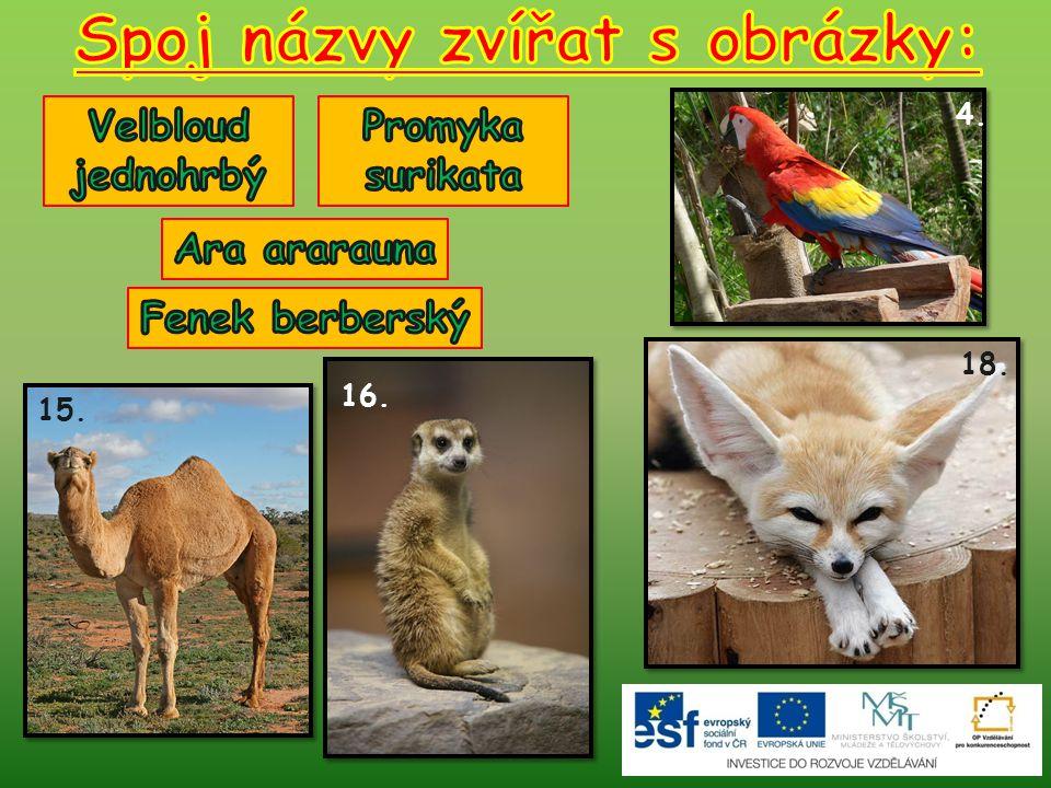 Spoj názvy zvířat s obrázky: