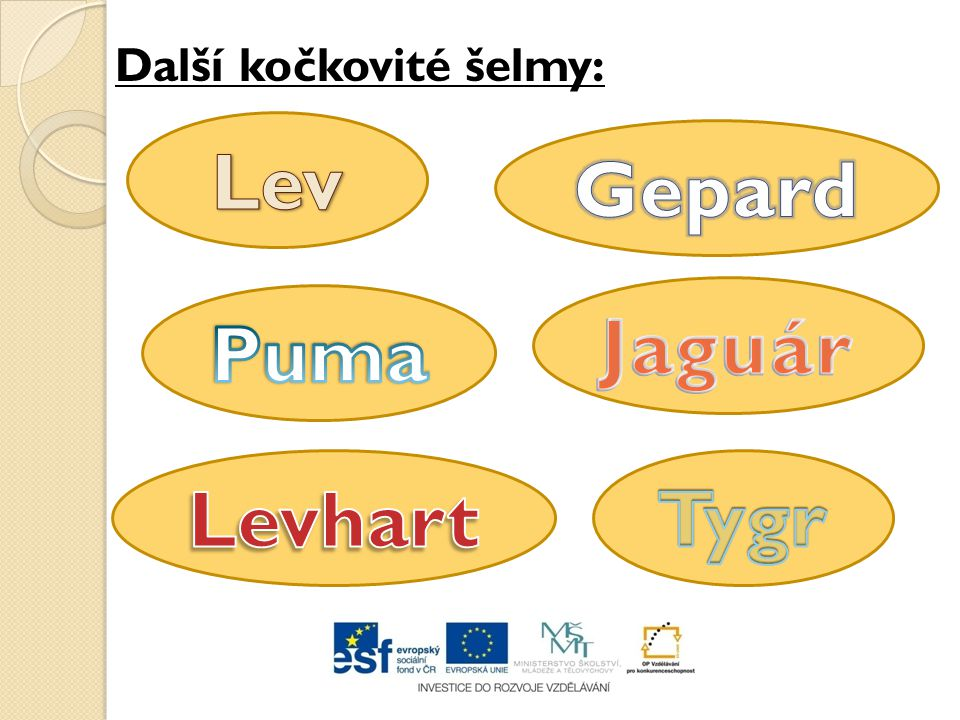 Lev Gepard Jaguár Puma Levhart Tygr