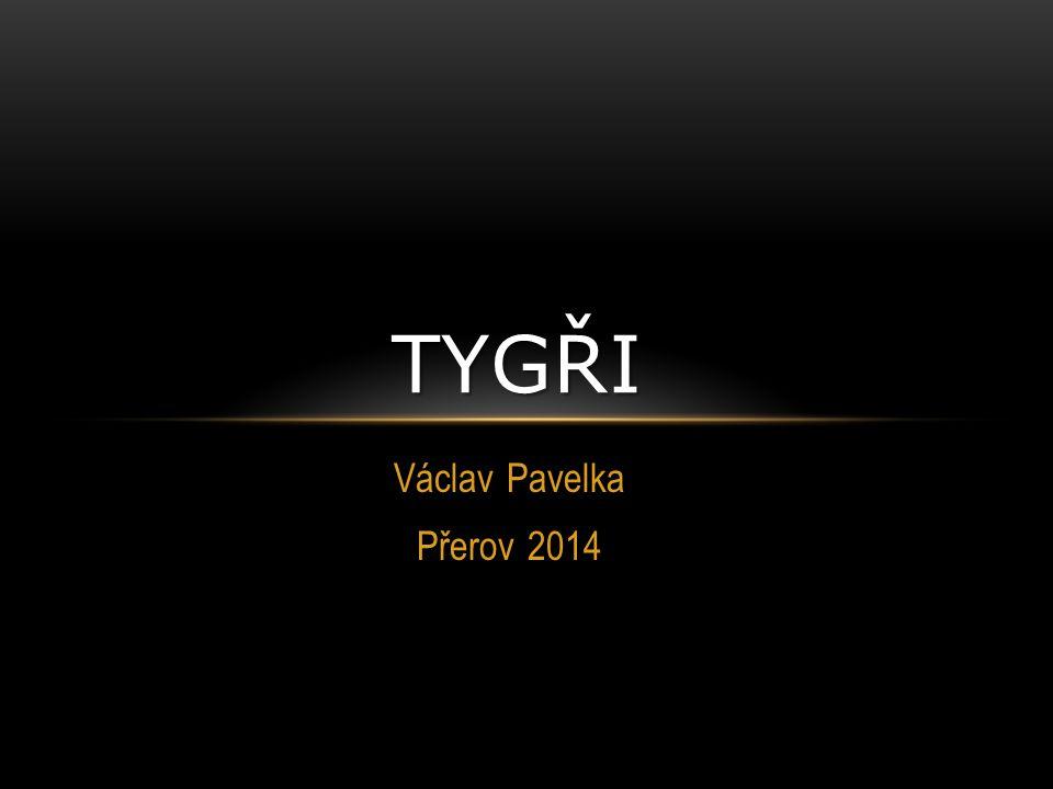 tygři Václav Pavelka Přerov 2014