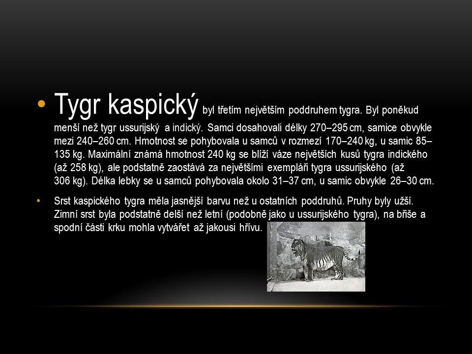 Tygr kaspický byl třetím největším poddruhem tygra