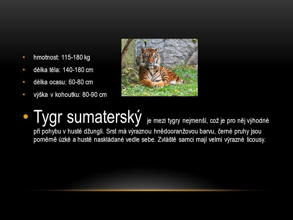 hmotnost: 115-180 kg délka těla: 140-180 cm. délka ocasu: 60-80 cm. výška v kohoutku: 80-90 cm.