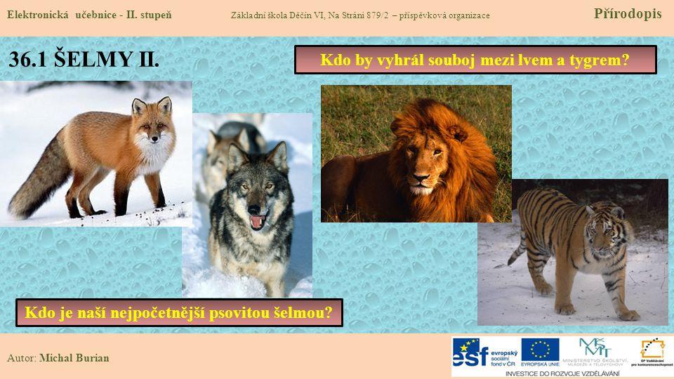 36.1 ŠELMY II. Kdo by vyhrál souboj mezi lvem a tygrem