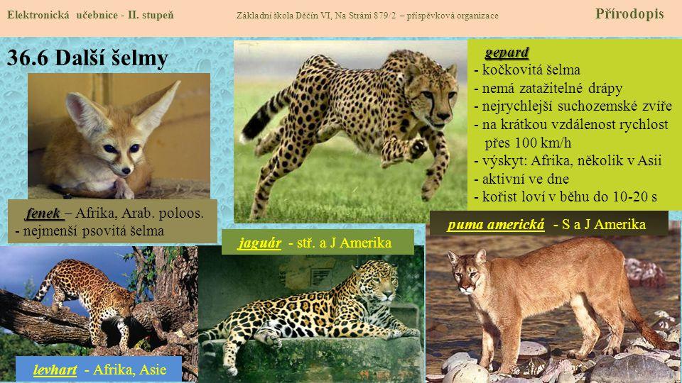 36.6 Další šelmy gepard - kočkovitá šelma - nemá zatažitelné drápy