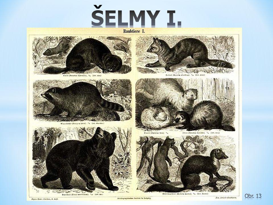 ŠELMY I. Obr. 13