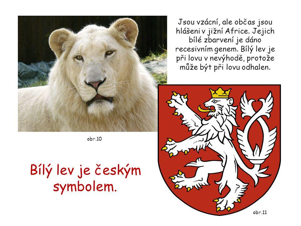 Bílý lev je českým symbolem.