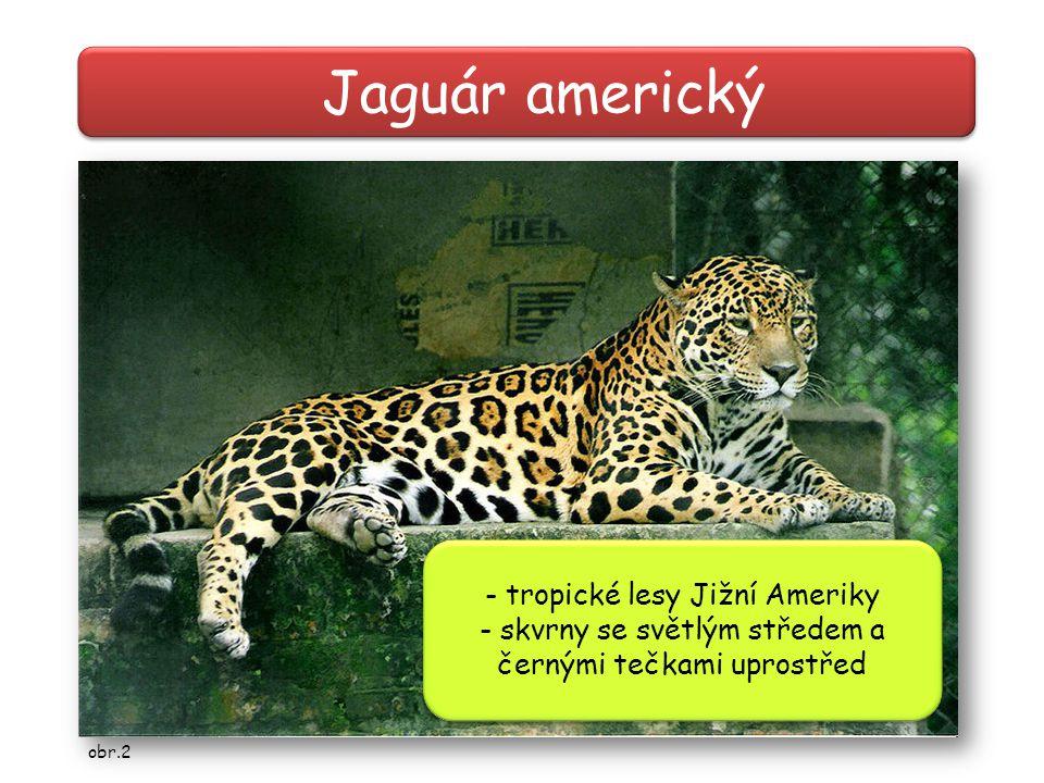 Jaguár americký - tropické lesy Jižní Ameriky