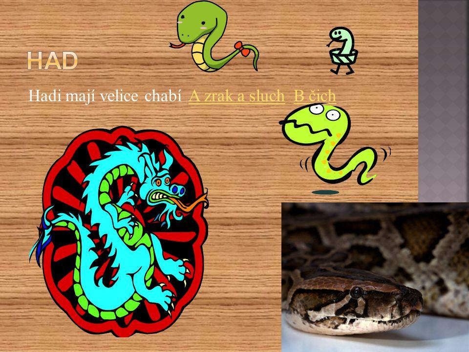 Had Hadi mají velice chabí A zrak a sluch B čich