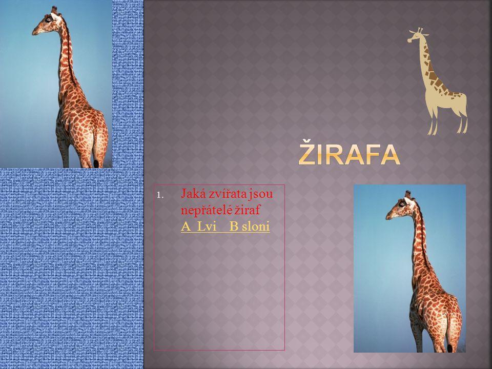 Jaká zvířata jsou nepřátelé žiraf A Lvi B sloni