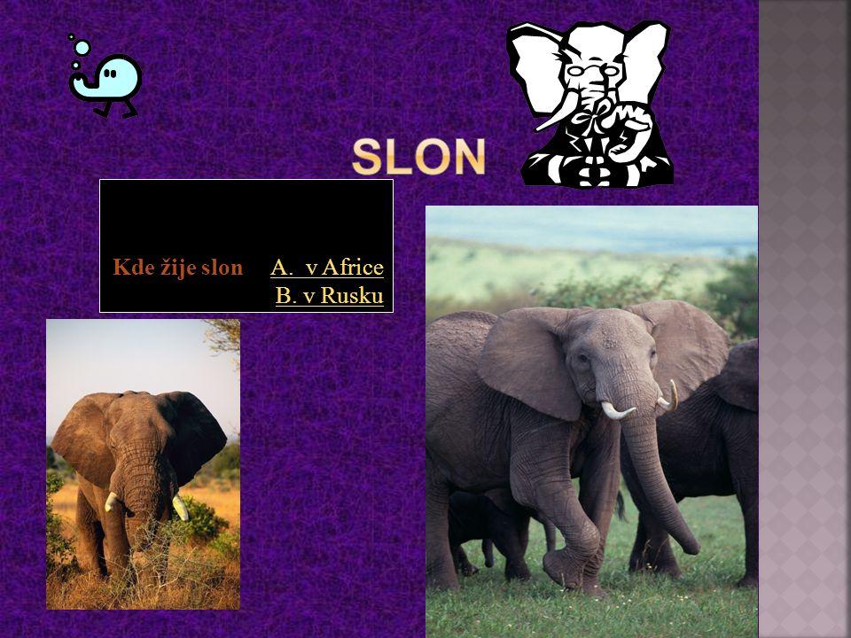 Slon Kde žije slon A. v Africe B. v Rusku
