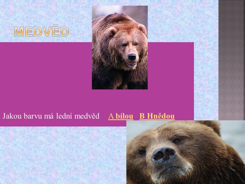 Medvěd Jakou barvu má lední medvěd A bílou B Hnědou