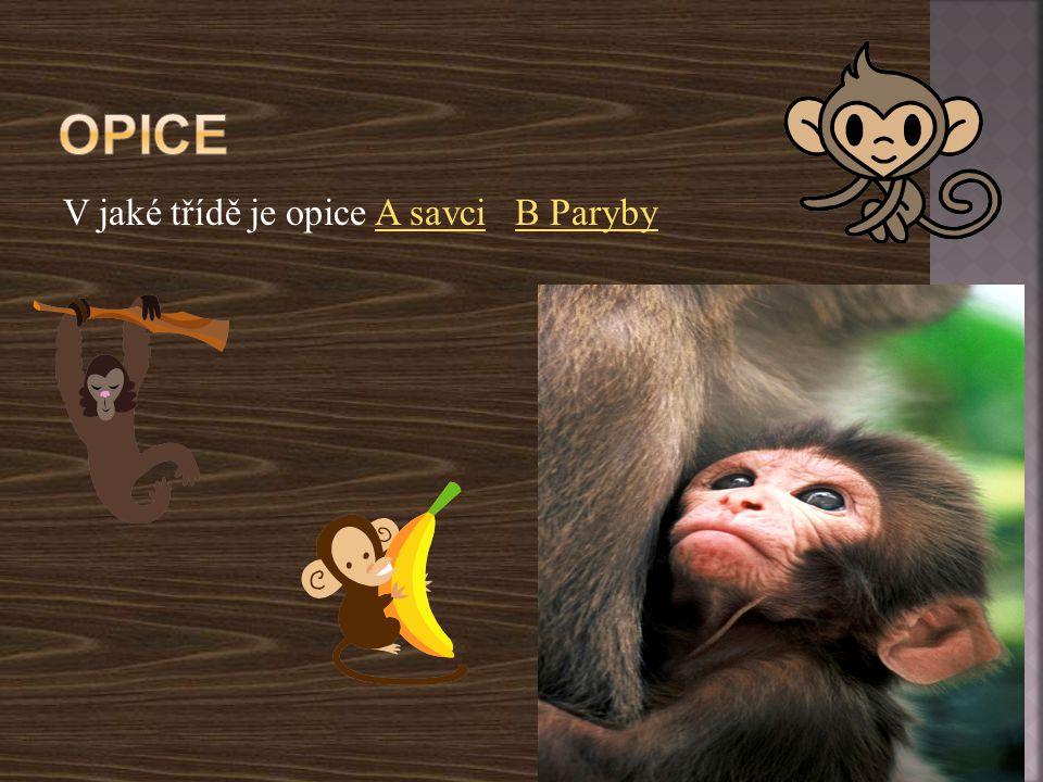 Opice V jaké třídě je opice A savci B Paryby