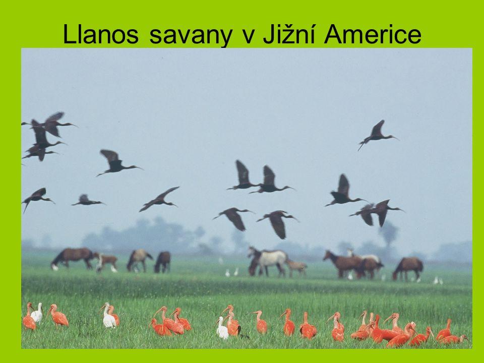 Llanos savany v Jižní Americe
