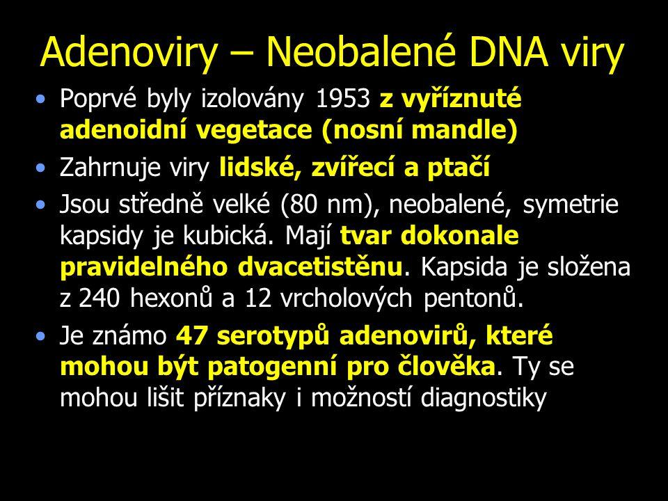 Adenoviry – Neobalené DNA viry