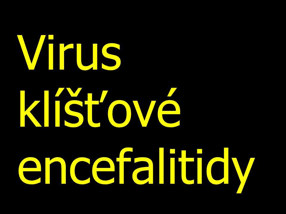 Virus klíšťové encefalitidy