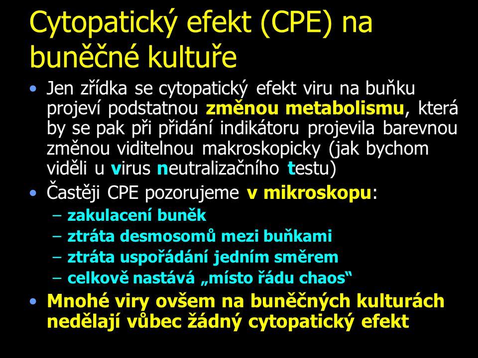 Cytopatický efekt (CPE) na buněčné kultuře