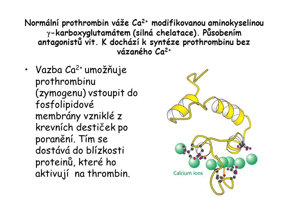 Normální prothrombin váže Ca2+ modifikovanou aminokyselinou g-karboxyglutamátem (silná chelatace). Působením antagonistů vit. K dochází k syntéze prothrombinu bez vázaného Ca2+
