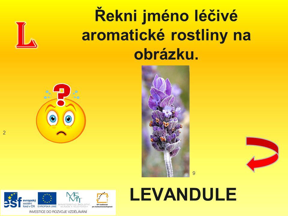 Řekni jméno léčivé aromatické rostliny na obrázku.