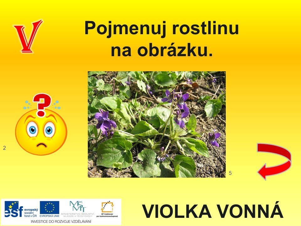 Pojmenuj rostlinu na obrázku.