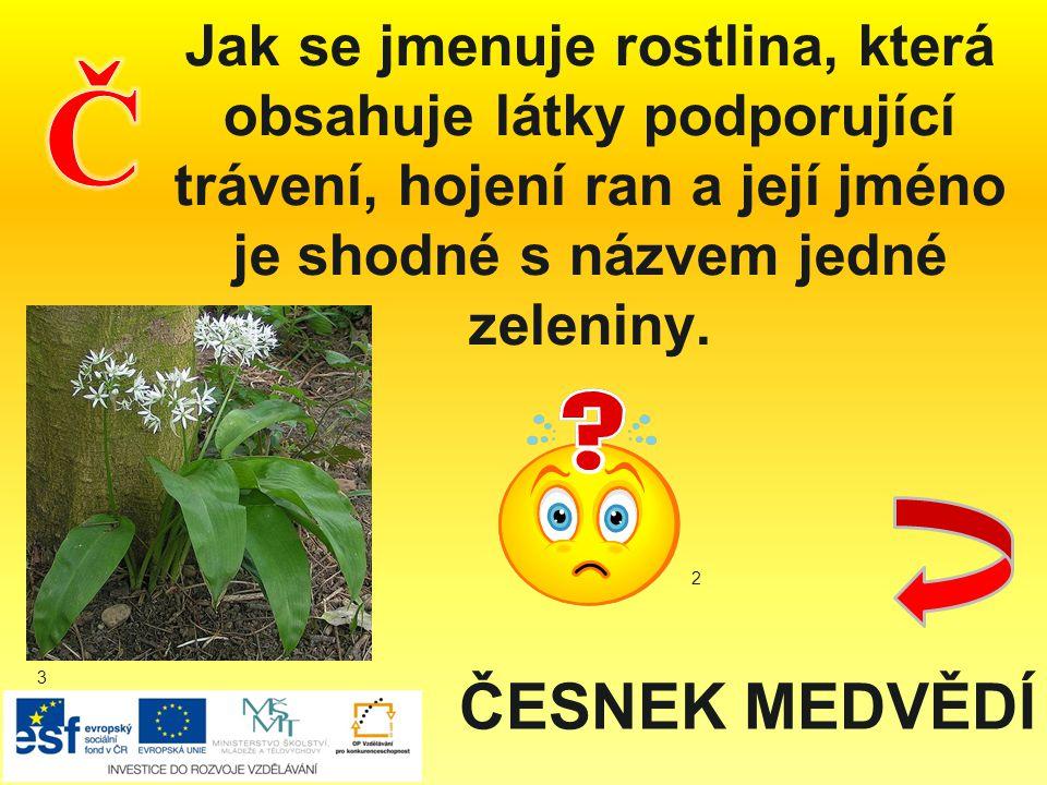 Jak se jmenuje rostlina, která obsahuje látky podporující trávení, hojení ran a její jméno je shodné s názvem jedné zeleniny.