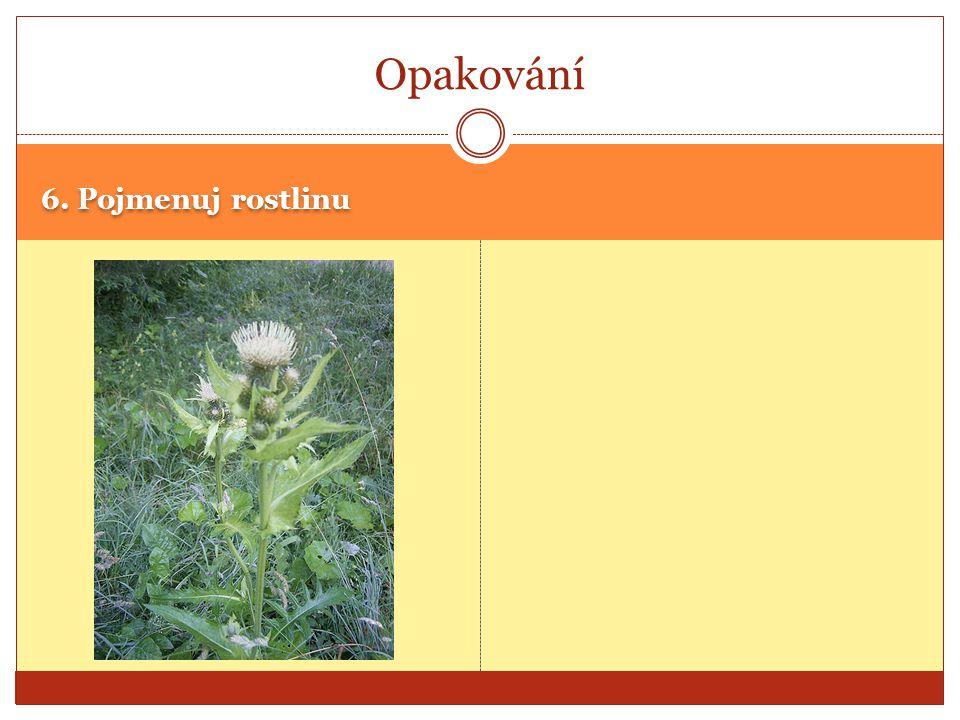 Opakování 6. Pojmenuj rostlinu